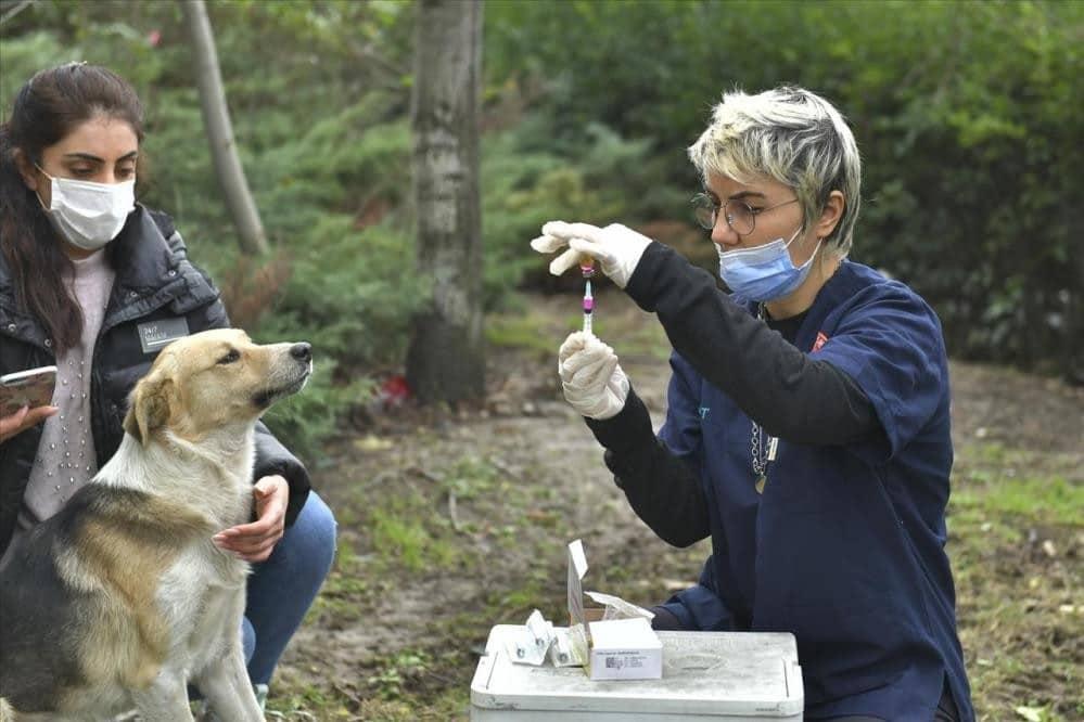 2 bin 131 köpeklere kuduz aşısı uygulandı