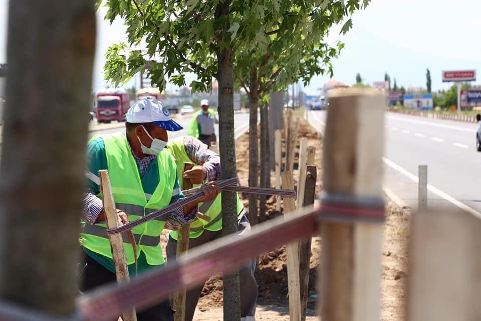Aksaray'da E-90 Karayolu şeker akçe ağaçları ile donatılıyor