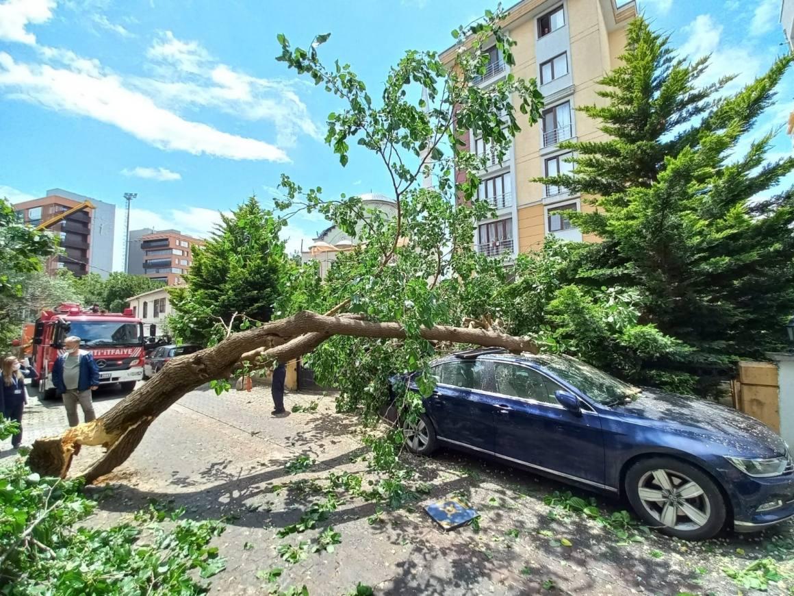 Ataşehir'de çürüyen ağaç arabanın üstüne devrildi