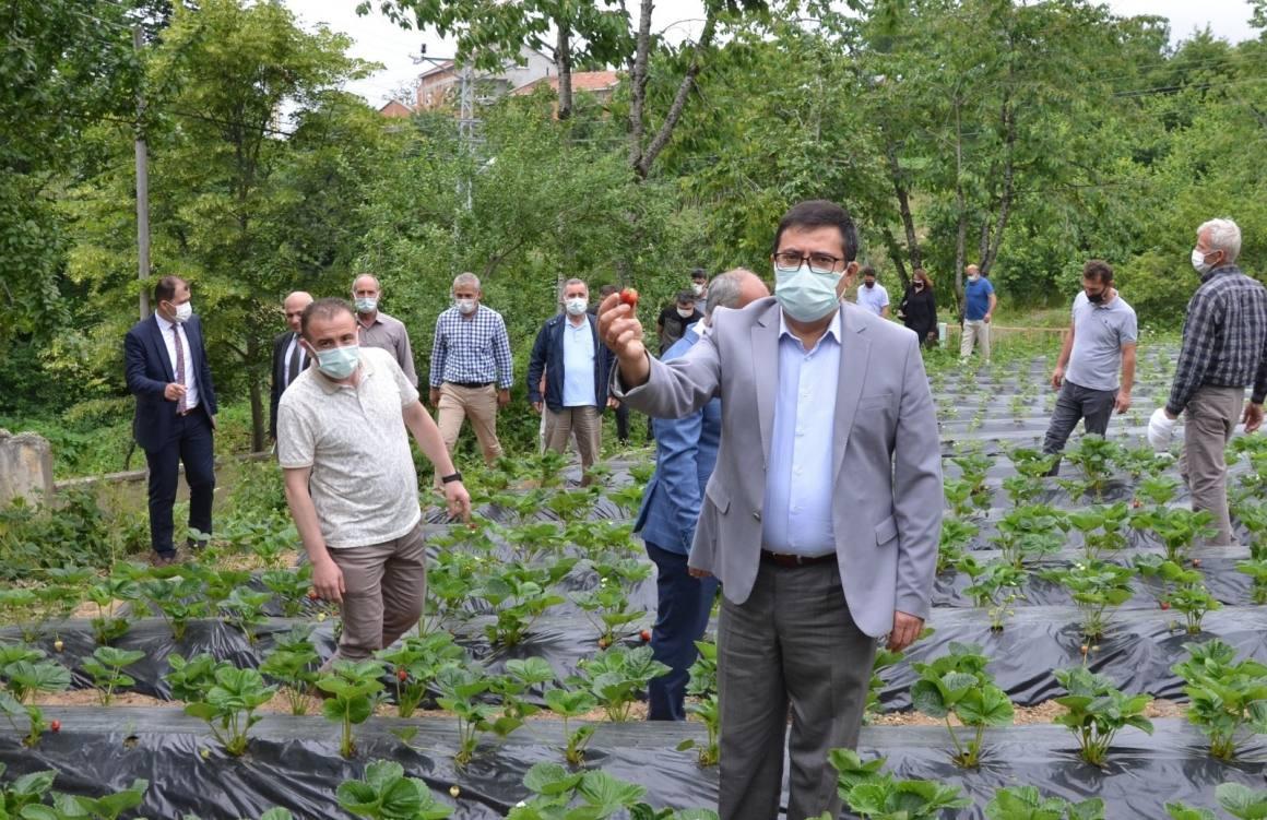 Dürtmen Yaylası çilek hasat etkinliği