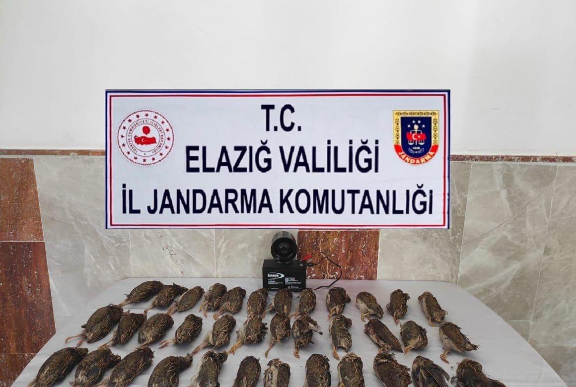Elazığ'da kaçak bıldırcın avına 8 bin 220 lira ceza