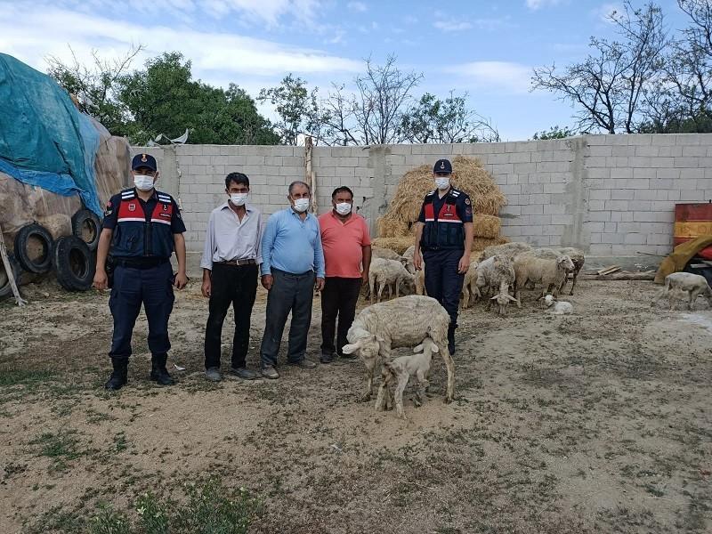 Eskişehir'de çalınan 23 küçükbaş hayvan Afyonkarahisar'da bulundu
