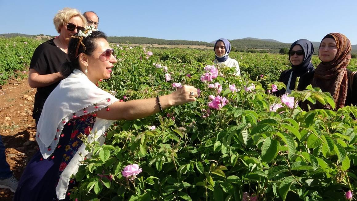 Gül bahçelerinde yabancı misafirlere 'gül eğitimi'