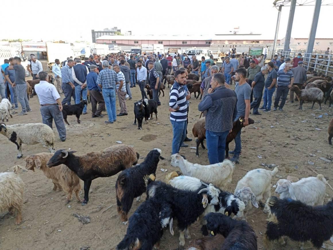 Iğdır hayvan pazarında Kurban Bayramı hareketliliği başladı