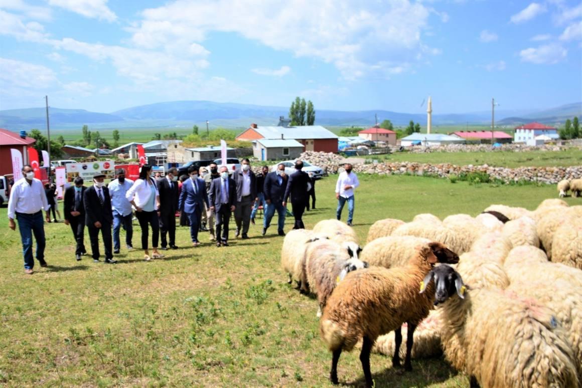 'Köyümde Yaşamak İçin Bir Sürü Nedenim Var' projesi kapsamında üreticilere koyun dağıtıldı