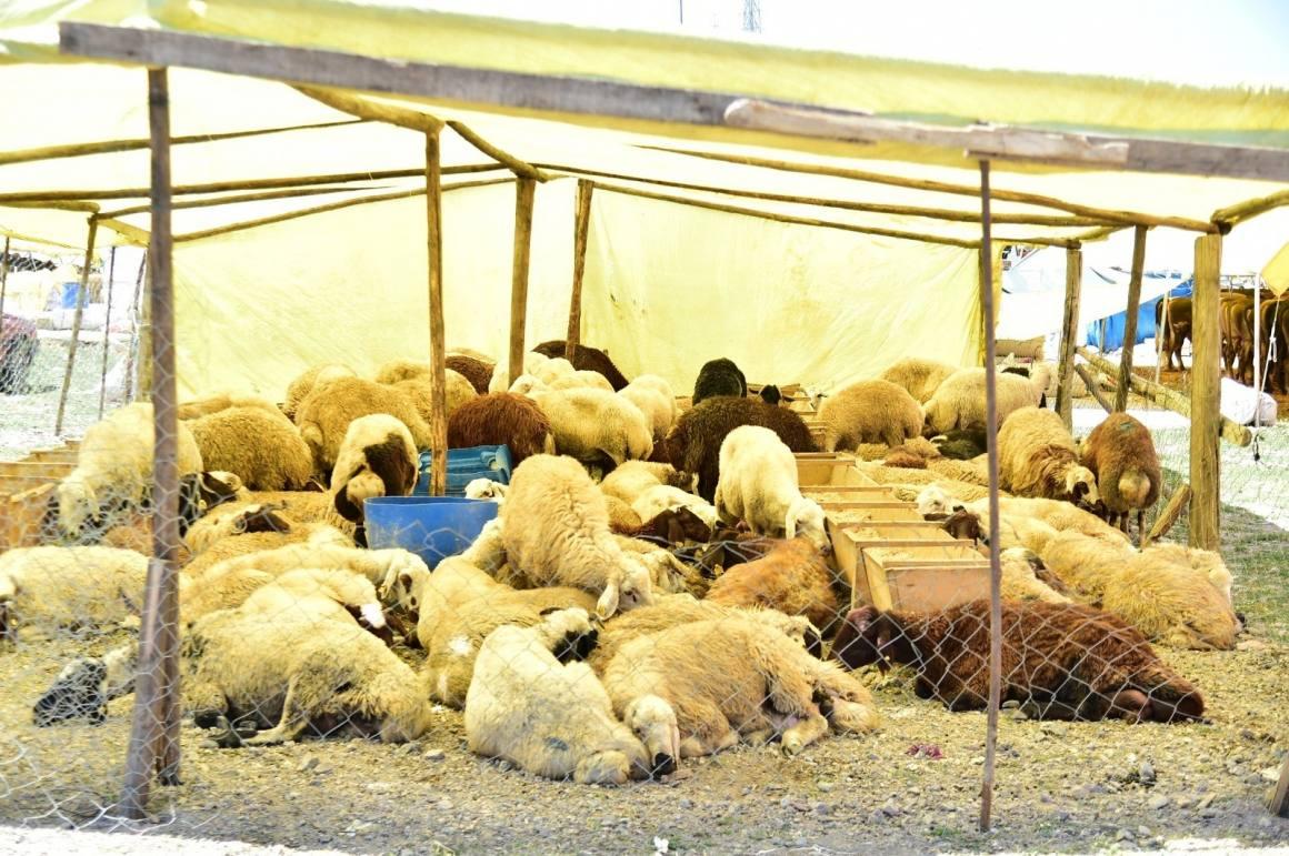 Mamak'ta kurban hazırlıkları başladı