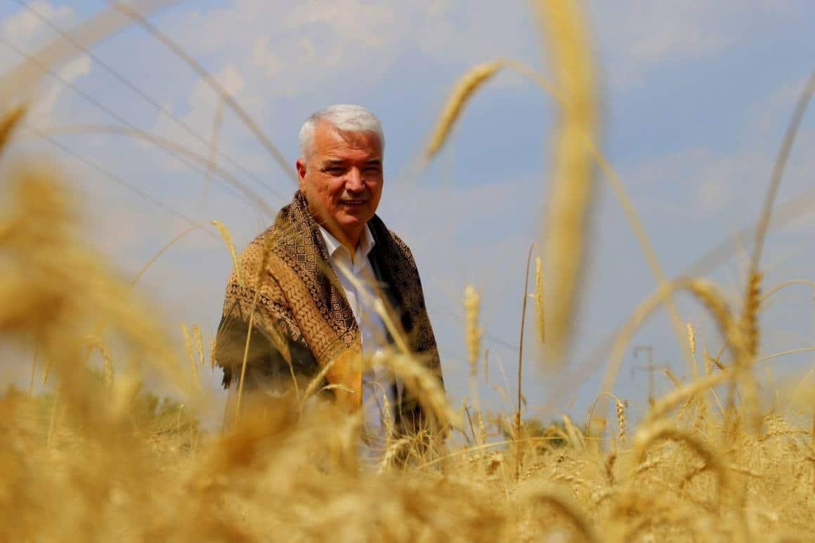 Saruhanlı Belediyesi ihtiyaç sahipleri için buğday hasadı yaptı