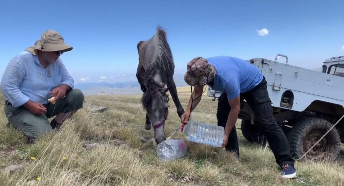 Yuları kayaya dolanan at, 20 sonra amatör telsizciler tarafından kurtarıldı
